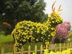 合肥菊花造型種植價格