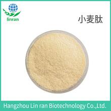 小麥低聚肽水解小麥蛋白肽小麥小分子多肽蛋白粉