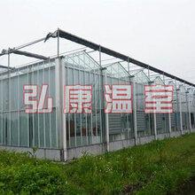 弘康溫室玻璃連棟溫室建設