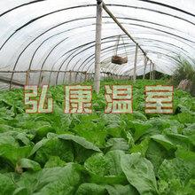 弘康溫室蔬菜采摘大棚建造