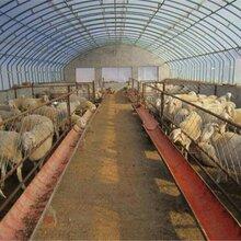 弘康溫室畜牧養殖溫室建設