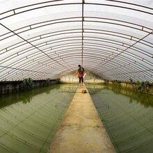弘康溫室水產養殖溫室建設