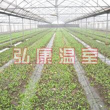 弘康溫室蔬菜種植溫室建設