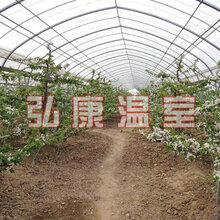 弘康溫室果樹種植溫室建設