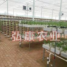 弘康溫室無土栽培溫室建設