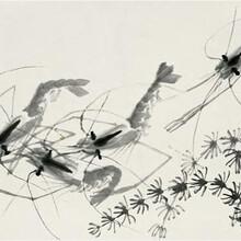 昆虫记化石书中的象虫,化石估价图片