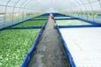 見康水耕智慧農業有限公司開啟水培蔬菜新時代