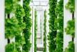 灣區綠菜水耕蔬菜:無土栽培的藝術