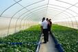 見康水耕期綠色果蔬推廣特訓營成功舉辦