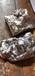 廢鈀碳回收_海綿金回收_臨猗廢鈀碳回收海綿金回收_上門回收廢鈀碳回收廠家