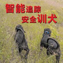 無線GPS獵犬項圈追蹤定位器圖片