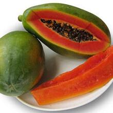 海南三亞紅心木瓜柔滑入口即化汁多味美果味極甜圖片