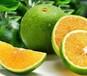 海南綠橙果實飽圓色光碧潤皮薄多汁5斤裝