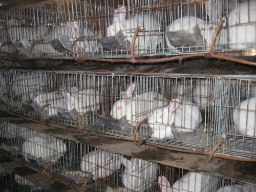 济宁六禾养殖有限公司