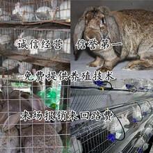 山东德州禹城养兔子基地农村养殖好项目图片