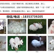 武漢大型養兔場肉兔的養殖技術及方法