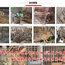 浙江丽水缙云大型养兔场扶贫养兔图片