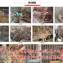 臨夏養兔場農村養殖好項目