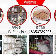 安徽淮南凤台卖种兔的基地包教技术包回收图片