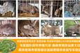 文山養兔場種兔養殖利潤