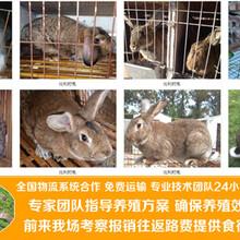 湖南湘西永顺养兔场地址扶贫养兔图片