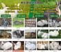 永州大型養兔基地現在肉兔價格