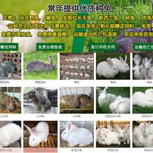 湖北十堰郧西肉兔养殖场扶贫养兔图片