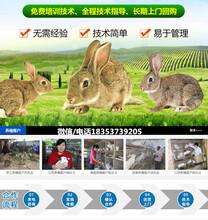 山东临沂郯城养兔场地址手把手教你养兔图片