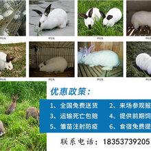 平頂山養兔子基地種兔養殖利潤