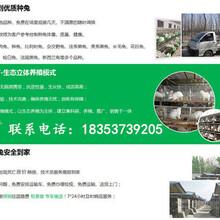 河北唐山丰润大型养兔场种兔价格图片