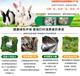 張家口市肉兔養殖場種兔價格