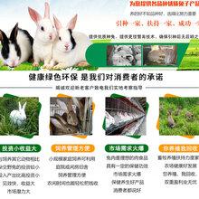 来宾市卖肉兔的养殖基地签订回收合同图片