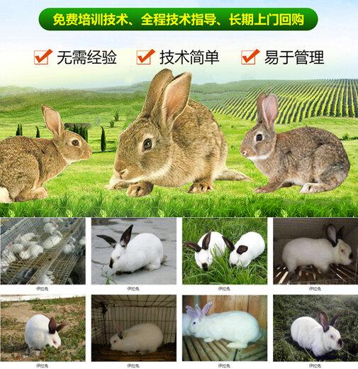 百色市养兔场加盟养兔