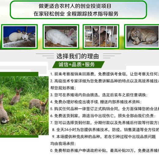攀枝花市卖种兔的基地养兔子成本
