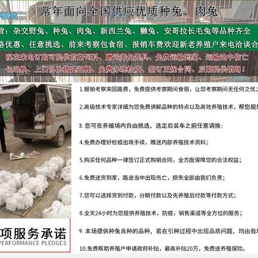 郑州市肉兔养殖场养兔子成本