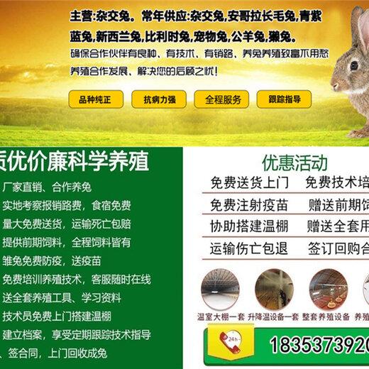 张家界市大型养兔基地100只兔子利润