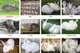 渭南市本地養兔場先養后結算