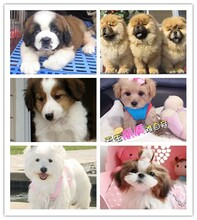 廊坊狗舍的場地狗場個人狗狗養殖戶圖片