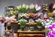 流星花园鲜花品相普遍较好了鲜花行业的高速发展