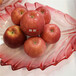 草莓苗供应幸之花草莓苗高产方法幸之花高产品种