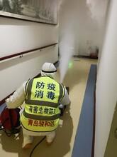 青岛崂山消毒消杀公司图片