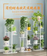 泉州铁艺花架地式绿萝客厅大堂展示花架阳台盆栽架图片