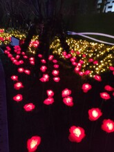 荆州独特灯光展图片