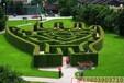 無錫大型綠植迷宮有趣好玩