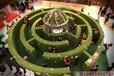 株洲綠植迷宮強大腦版