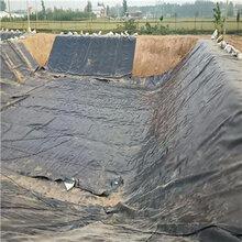 鱼塘防渗膜藕池土工膜HDPE土工膜价格图片