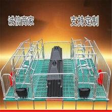 母豬產床養豬設備廠家單體產床雙體全復合母豬產床