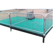 養豬設備仔豬保育床熱鍍管小豬保育床保育欄養殖場豬用設備