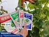 小麥花生水稻抗病高產套餐園掌柜蔬菜增產劑作物高產套餐