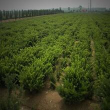 吳中區園林綠化養護公司圖片
